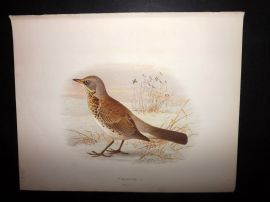 Butler, Frohawk & Gronvold 1908 Antique Bird Print. Fieldfare 04